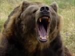 Медведь напал намужчину вПриморье