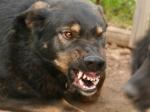 Бойцовская собака растерзала прохожего вцентре Москвы