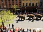 Сбежавший изцирка слон убил мужчину вГермании