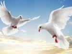 Наюго-западе столицы похищены 99 голубей