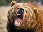 В «Ергаках» супружеская пара подверглась нападению медведя