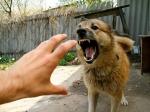 Домашние собаки насмерть загрызли ребенка вХМАО