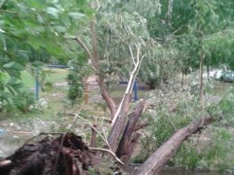 ВСамаре натерритории детсада 5-летнюю девочку убило упавшей веткой дерева