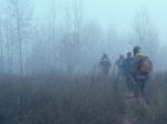 Мэрия Братска предложила награду за информацию о поджигателях лесов
