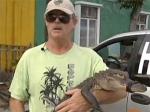 Американец оценил объятия с аллигатором в пять долларов