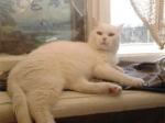 В Екатеринбурге спасли выброшенного в реку кота