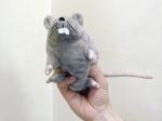 Крысы и мыши объедают сотрудников штаб-квартиры ООН
