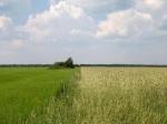 При продаже земельных участков в Бурятии выявлены серьезные нарушения