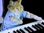 В Лондоне размещена вакансия «специалиста по кошачьему видео»