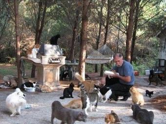 Кошачий рай или как в одном приюте уживаются 600 кошек