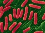 Египет отрицает причастность к ввозу опасного штамма E.сoli