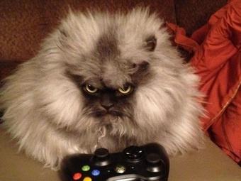 Самый пушистый кот в мире— «Полковник Мяу»