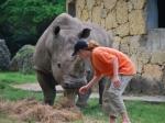 В зоопарке носорог откусил женщине пальцы