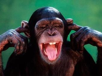 Шимпанзе, рисующий языком, стал мировой знаменитостью