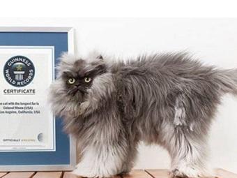 Самая старая кошка в мире живет в Великобритании
