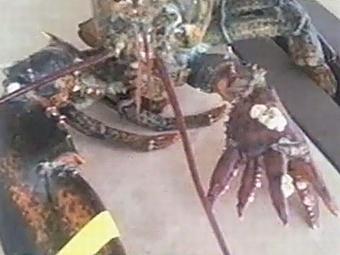 Омар Лола с «пятерней» вместо клешни обрёл дом