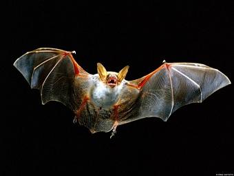 Трагический полет человека «летучая-мышь»