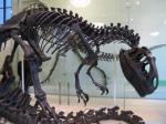 Скелет динозавра пойдёт с молотка за 600 тысяч фунтов