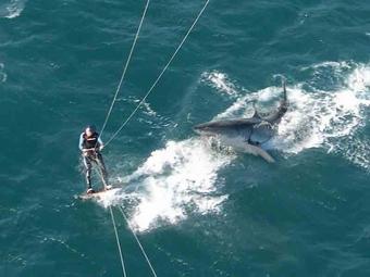Серфер из Австралии погиб от нападения акулы