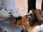 Ещё один житель Гонг Конга заболел птичим гриппом