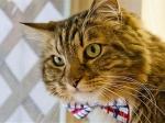 В США скончался кот— кандидат на пост президента страны