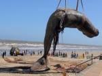 По дорогам Уэльса ехал семнадцатиметровый кит