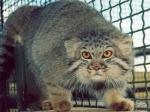 10-килограммовый кот запер испуганных хозяев в спальне
