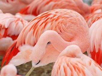 Во Франкфурте ищут убийцу розовых фламинго