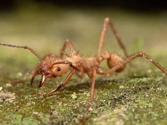 Огненные муравьи чуть не съели похитителей мотоциклов
