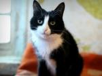 Пропавший 5 лет назад кот вернулся домой