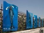 Мёртвого кита подростки изрисовали граффити