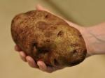 Преступник ограбил магазин с помощью картофелины