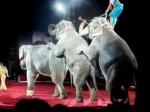 В Британии запретят цирки с животными