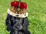 У щенка Кейт Миддлтон и принца Уильяма появился твиттер