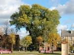 iPhone теперь смогут различать деревья по листьям